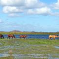 River Horses Horizon by Photos By Cassandra