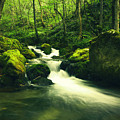 River In A Green Forest by Sandra Rugina