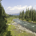 River In Denali National Park by Phyllis Taylor