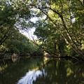 River In The Jungle. by Radoslav Nedelchev