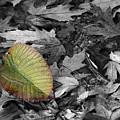 River Leaf by Dylan Punke