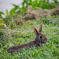 River Rabbit by Jan M Holden