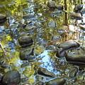 River Rocks by Suzanne Shepherd