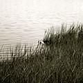 River Shore by Laura Ogrodnik