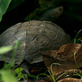 River Turtle 2 by Totto Ponce