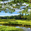 River Under The Maple Tree by David Patterson