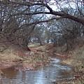 Rivers Bend by Shari Chavira