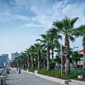 Riverside Promenade Park And Skyscrapers In Downtown Xiamen City by Jacek Malipan