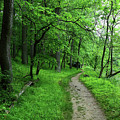 Riverside Woodland Trail In Patapsco Valley State Park by James Brunker