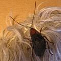 Roach Hair Clip by Roger Swezey