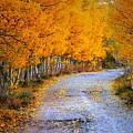 Road Between Trees by Galeria Trompiz