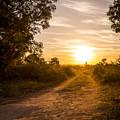 Road In Botswana by Tim Hester
