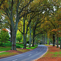 Road In Charlotte by Jill Lang