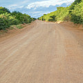 Road In Tanzania by Marek Poplawski