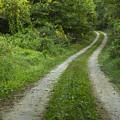 Road In Woods 1 D by John Brueske