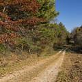 Road In Woods Autumn 5 by John Brueske