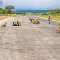 Road In Zambia by Marek Poplawski