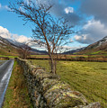 Road Less Travelled by Adrian Evans