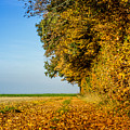 Road Of Leaves by Dr Charles Ott