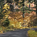 Road To Autumn by Wes and Dotty Weber