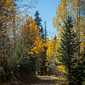Road To Fall Colors by Robert Bales