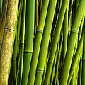 Road To Hana Bamboo Panorama - Maui Hawaii by Brian Harig