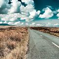 Road To Nowhere by Gabriela Insuratelu