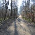 Road by Wojtek Kowalski
