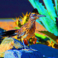 Roadrunner by John Malmquist