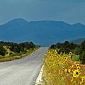 Roadside Florist by Lou  Novick