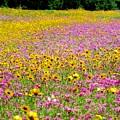 Roadside Flower Garden by Tim Townsend