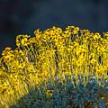 Roadside Flowers by Stephen Whalen