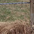 Roadside Grasses by Colleen Cornelius