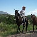 Roadside Horses by Anita Burgermeister