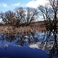 Roadside Pond I by Debbie Oppermann