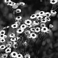 Roadside Wildflowers by DigiArt Diaries by Vicky B Fuller