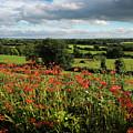Roadside Wildflowers In County Clare by James Truett