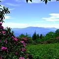 Roan Mountain Rhododendron Gardens by Christal Randolph