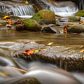 Roaring Fork Stream Great Smoky Mountains by Steve Gadomski