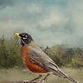Robin Abstract Background by Linda Brody