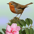 Robin And Camellia Flower by Warren Photographic
