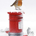Robin And Postbox by Warren Photographic