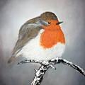 Robin by Andreea Moldovan