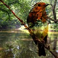 Robin By The River by AZ Creative Visions