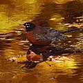 Robin by Deborah Selib-Haig DMacq