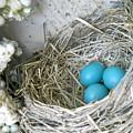 Robin Eggs In A Wreath by Marqueta Graham