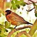 Robin In Tree by Kim Bemis