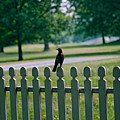 Robin On A Fence by Lone Dakota Photography