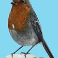 Robin On Cup by Jackie Besteman