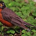 Robin Portrait by Marcus Dagan